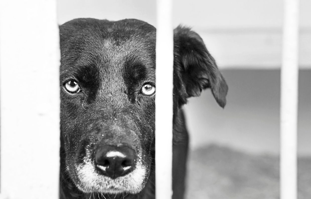 Worried About Your Dog Or Cat And Coronavirus? Here's What To Know