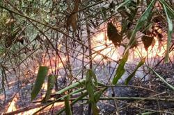 Man arrested for setting fire at forest reserve in Kedah