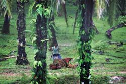 Malaysia palm giants warn shutting estates will worsen pandemic