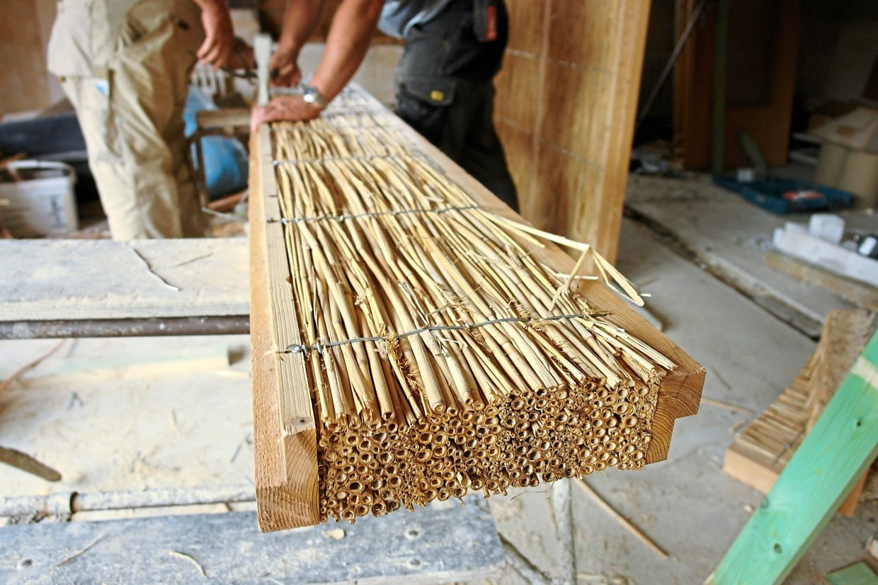 Reeds are increasingly being discovered as a material for use inside walls.