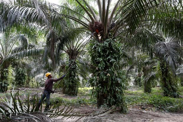 Palm oil futures to remain sluggish next week