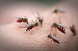 A Google plan to wipe out mosquitoes appears to be working