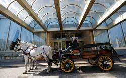With no tourists, Vienna's horse-drawn carriages deliver lockdown meals