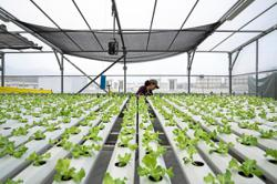 Singapore ramps up rooftop farming plans