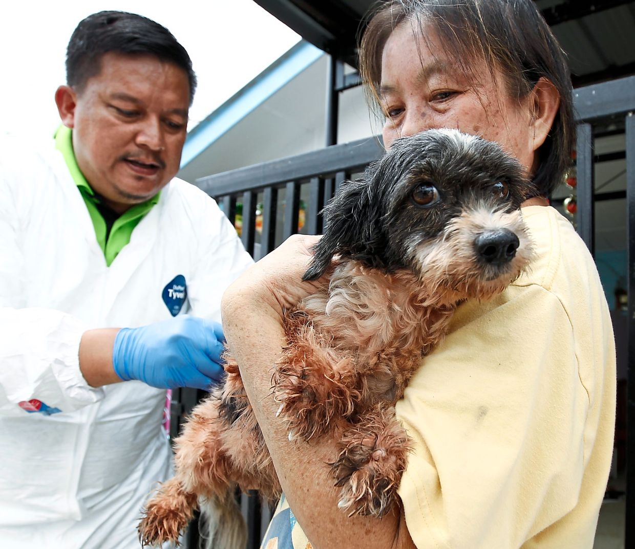 A pet dog gets vaccinated against rabies in Kuching in this 2017 filepic, when the rabies outbreak in the state of Sarawak first began. The rabies virus can pass from an infected animal to a human through its saliva, usually via a bite.