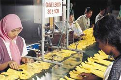M'sia to export more rubber gloves
