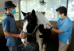 Thailand begins mass vaccination of horses to curb African Horse Sickness spread