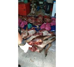 Five arrested for possession of deer meat without permit
