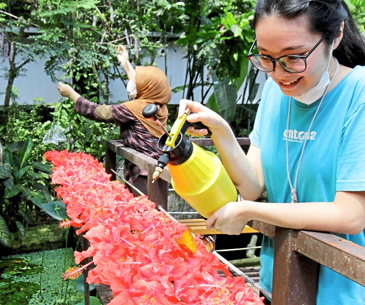 Floral duty: Entopia by Penang Butterfly Farm zoology operation senior officer Melissa Yung, 28, watering flowers at the park.