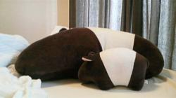 The tapir's special place in Japanese folklore