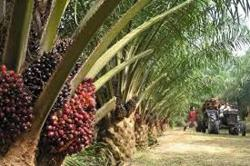 Sabah palm oil firms want private jetties to be reopened