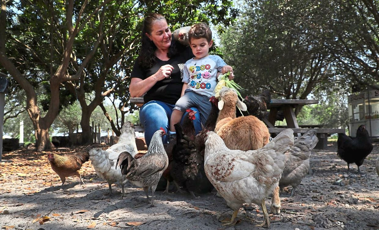 Lisa Ceruti and her grandson Carter looking to buy a chick. 'It's an interesting idea right now to buy chicks and chickens, especially when people feel scared about going to grocery stores,' says Ceruti.