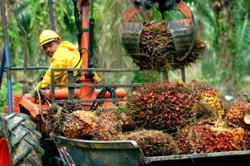 Palm oil rises on higher crude prices, but set for 13% monthly drop