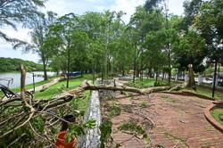 Uprooted trees in Shah Alam park cleared