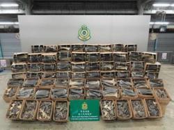 Hong Kong seizes huge haul of fins from 38,500 endangered sharks