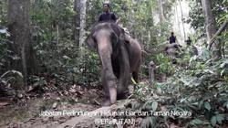 Jumbo drop: Elephants help deliver aid to Orang Asli at Krau wildlife reserve