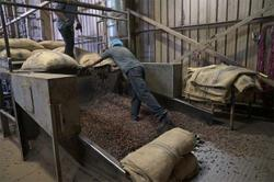 Lower export earnings from cocoa seen due to virus