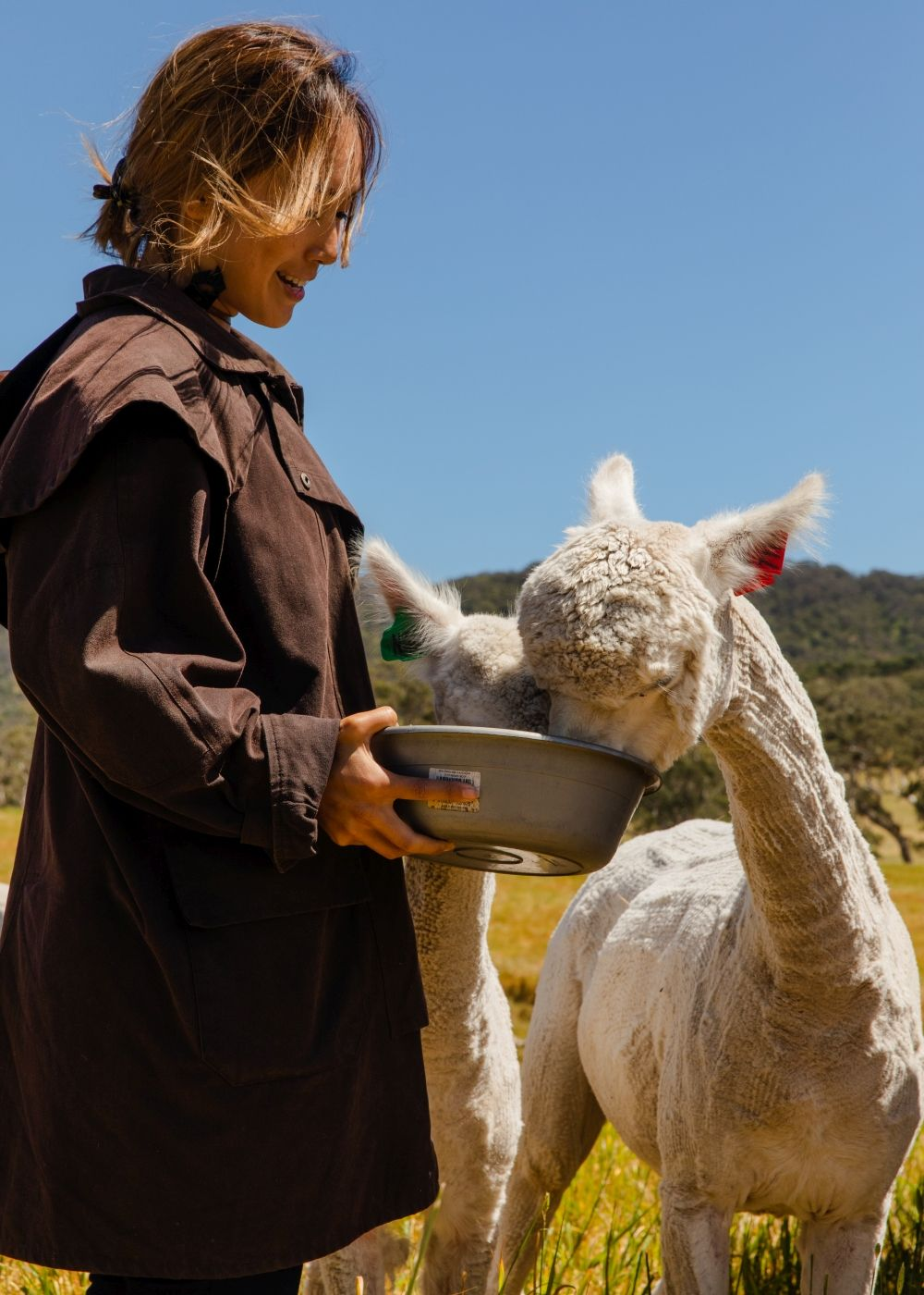 Get up close and feed the alpacas while experiencing true farm life. Photo: South Australia Tourism Commission