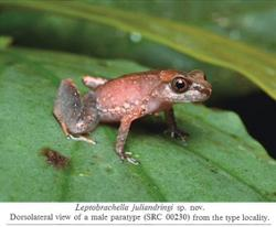 Five new and rare animal species discovered in China's Yunnan near Myanmar, Laos and Vietnam