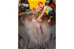 Photos of men killing endangered giant freshwater stingray draw anger among nature lovers