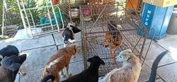 Shelter for abandoned and abused animals