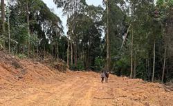Land clearing near Bukit Cerakah raises concerns