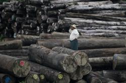 Over 3,400 tonnes of illegal timber seized in Myanmar