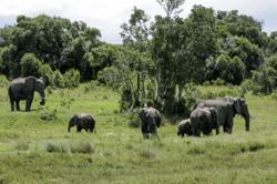 Virtual safaris keep wildlife in sight for absent tourists