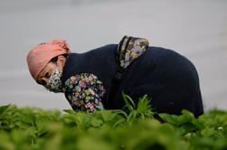 EU plans to halve pesticide use, expand organic farming