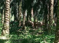 Sabah rangers have a jumbo job at hand
