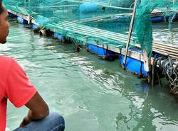 High quality fish breeders in deep water as sales dry up