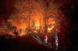 Indonesia wets peat lands to ward off forest fires