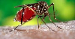 No Covid-19, but Laos now has big dengue fever problem