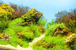 Eye-catching aquatic plants for your aquarium