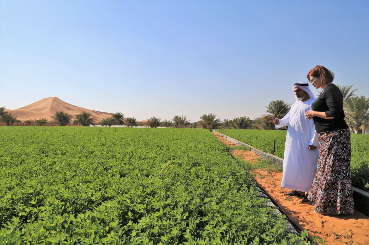 An ICBA scientist helps a farm owner in the Al Wagan area near Al-Ain, UAE. — International Center for Biosaline Agriculture (ICBA)/Handout via Reuters