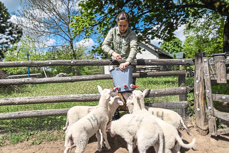 City folk becoming cheesemakers in Polish lake region
