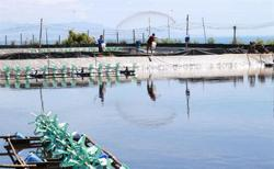 Vietnam expects to boost shrimp exports in coming months