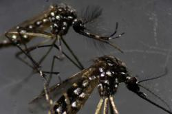 Dengue cases on the rise in Negri
