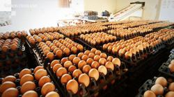 Thailand plans to export 200 million eggs in six months