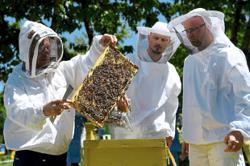 Lockdown gives Albanian beekeepers a 'golden year'