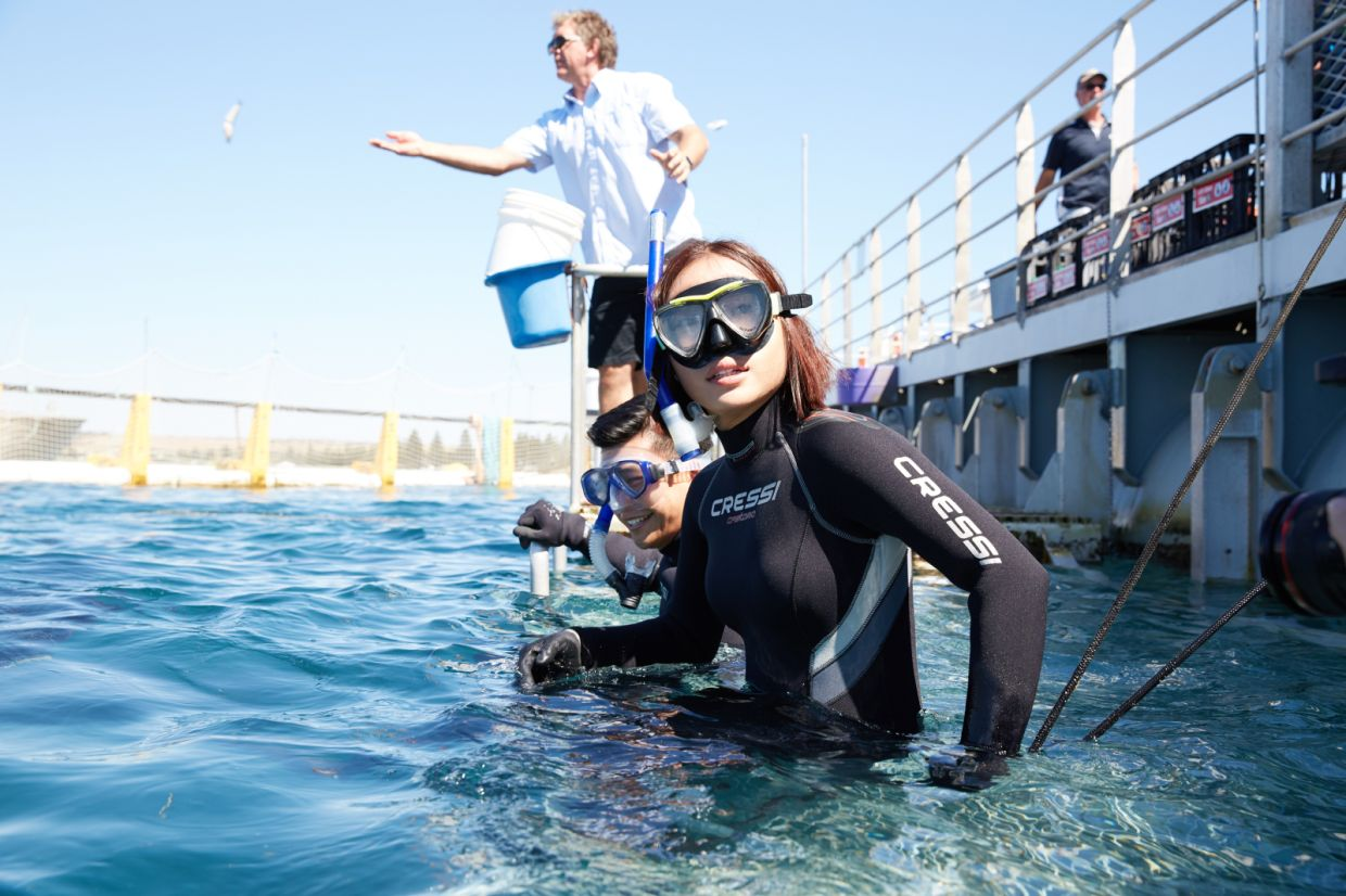 Don't miss out on the chance to swim with a bluefin tuna. Photo: South Australia Tourism Commission