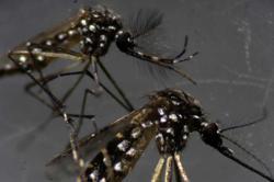 Negri Sembilan sees rise in dengue cases