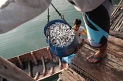 Indonesian ministry proposes US$69m stimulus for fisheries, aquaculture