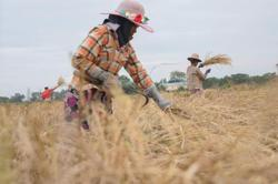 Myanmar approves loan from World Bank for farmers