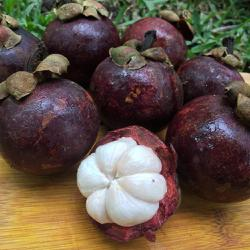 Thailand's much-loved mangosteen takes charter flight to China