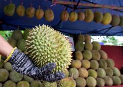 Datuk among 22 compounded for eating durian at stall