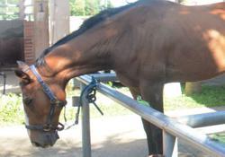 Rider and horse in quarantine for zone breach