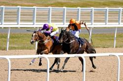 Thrumming hooves marks return of English sport at Newcastle