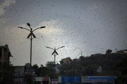 Drones to disc jockeys: India battles new wave of crop-munching locusts