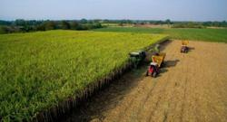 Ministry plans subsidy for Thai sugarcane farmers